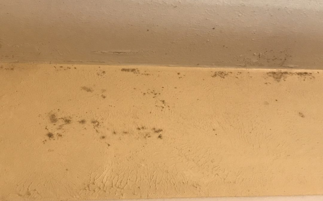 Who is to Blame for Mold?