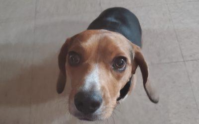 Mold Detecting Dog vs. Air Samples