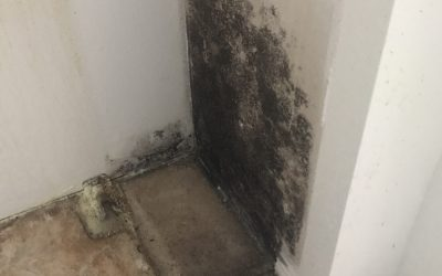 Is it really Black Mold?
