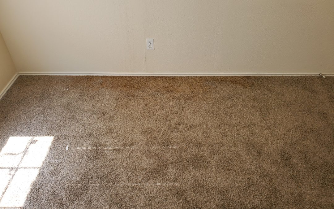 Can You See the Mold in the Carpet?
